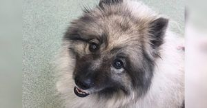 A Dog With A Troubled Past Wins The People World's Cutest Rescue Dog Contest