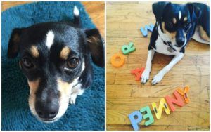 After Being Re-Homed Several Times, This Puppy's New Mom Discovers Her Amazing Talent