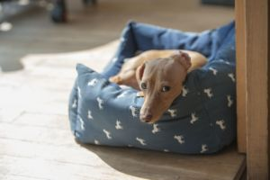 Here's Why Your Dog Pees The Bed.It's Not What You Think