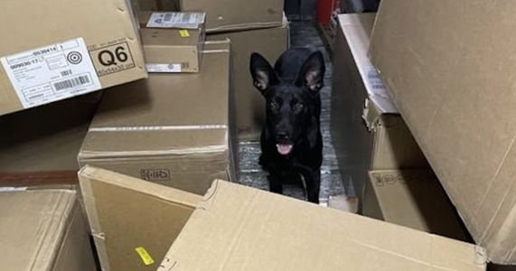 Runaway Rescue Dog Helps FedEx Driver Deliver Packages