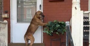 Confused Dog Refuses To Leave Porch After Family Moves Away