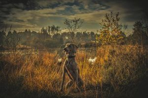 5 Places To Check For Foxtail Grass On Your Dog
