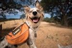 Michigan State Parks and Campgrounds to Expand Pet-Friendly Camping