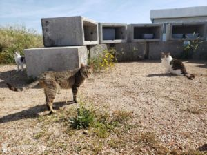 From the Field: Amazing Organizations in Barcelona Protect Cats