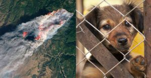 Celebrities Affected By Wildfires Lend Their Voices To California's Pets - And You Can Help, Too