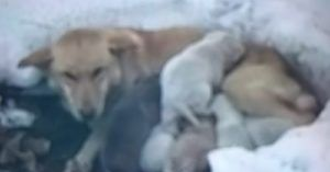 Hungry Mama Dog And Litter Found Freezing In Minnesota Snowdrift