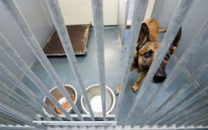 14 Totally FREE Ways To Help Shelter Dogs & The Staff Who Care For Them