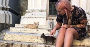 Amber Abroad: Part 6 - Fostering Kittens In Cambodia