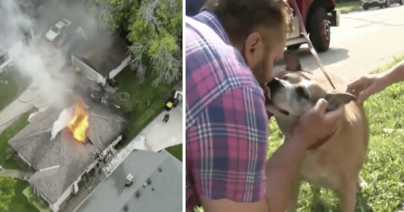 Man Risks His Life In Burning Home To Save Stranger's Rescue Dog