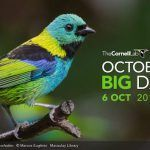 Don't Miss the First October Global Big Day!