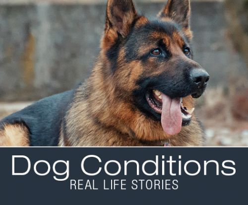 When Symptoms Are Not What They Seem: Molly's Hemangiosarcoma