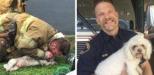 Firefighters Rescue & Revive Lifeless Dog Pulled From Apartment Fire