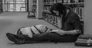 5 Super Service Dogs in Action with Their Handlers