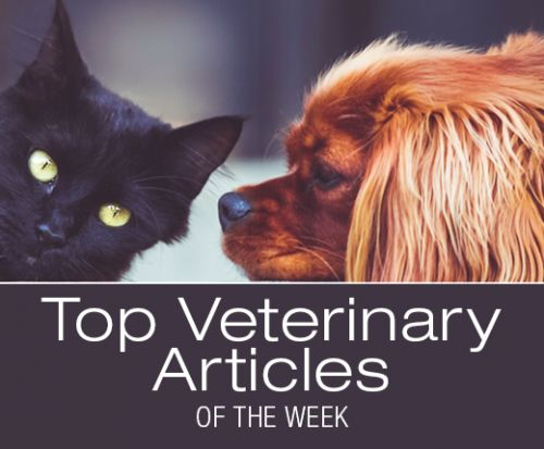 Top Veterinary Articles of the Week: Malignant Melanoma, Medicinal Mushrooms, and more
