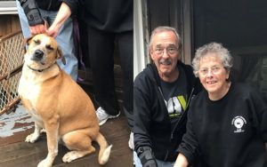 Read This Veteran's Firsthand Account Of How His Canine Companion Changed His Life