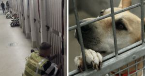Inmates Comfort Shelter Dogs During Fourth Of July Fireworks