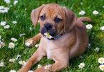 It's Spring! 5 Tips for Dog Owners