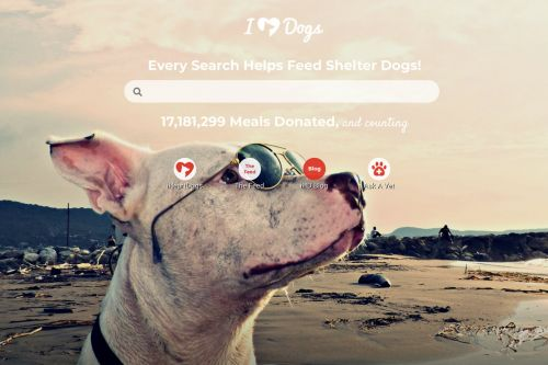I Switched My Browser's Search Engine and Now It Donates Meals to Rescue Dogs Every Time I Search
