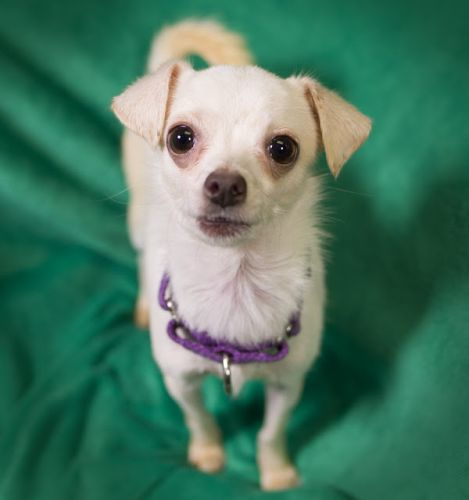 """POCKET"" cutie chi mix"