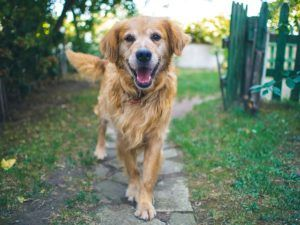 """The 4 Kinds Of Dog """"Smiles"""" & What They Mean"""