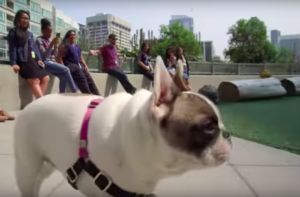Check Out The Campus At Amazon's Dog-Friendly Headquarters