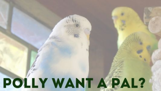 Polly Want a PAL? It's Adopt a Rescued Bird Month!