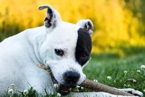 10 Dog Breeds That Will Chew Anything
