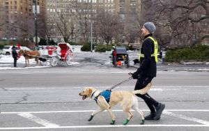 First Blind Man To Complete NYC Half Marathon Finishes Race With The Help Of 3 Guide Dogs