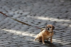 3 Simple Tips To Stop Your Dog From Pulling On Leash