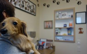 10 Vet-Recommended Ways To Save Money On Your Dog's Medical Care