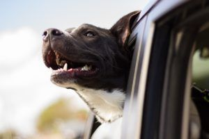Tesla Announces First Safety Feature Meant For Your Dog