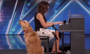 Singing Dog Gets Standing Ovation From Simon Cowell On 'America's Got Talent'