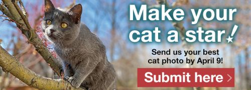 Cat Photo Submissions for the Alley Cat Allies® 2021-2022 Calendar Start Now