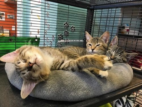Meet Bonobo, Gibbon and Wall-e - these 9 week old boys are