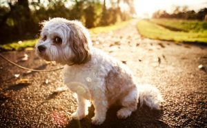 5 Home Remedies For Doggy Diarrhea