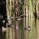 The Little Big Year - Week 42: Tucson's Sweetwater Wetlands