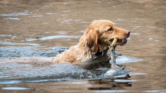 What is Leptospirosis?