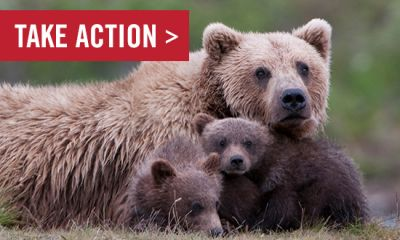 Act Now to Protect Animals in Alaska's National Wildlife Refuges
