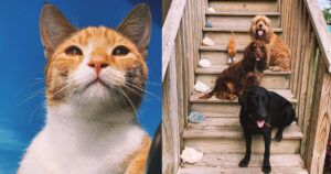 Marlin The Cat Speaks Meow & Loves To Fish, But Still Thinks He's A Dog