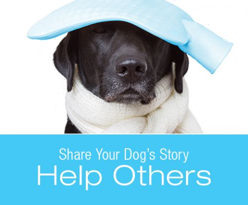 "Share Your Story for a Chance to Win a Free Copy of ""Symptoms to Watch for in Your Dog"""