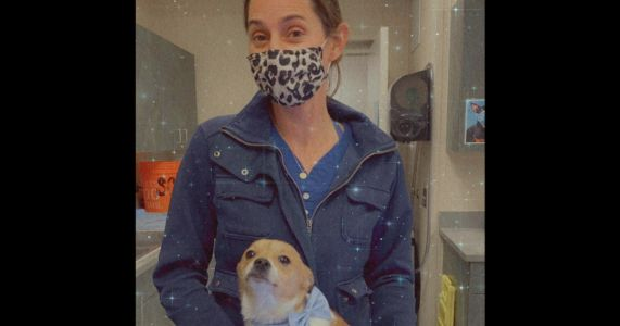 Chihuahua Amputee Gets Adopted By The Vet Who Saved Him