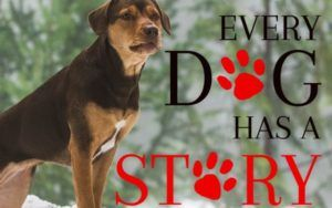 "Canine Star Of ""A Dog's Way Home"" Was Hand-Picked From A Tennessee Shelter"