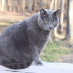 How Fast Is Too Fast For My Pet To Lose Weight?