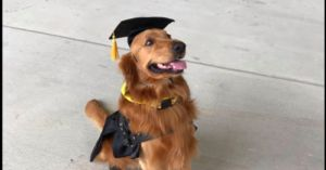Service Dog And Human Receive College Diploma With Much Pup & Circumstance