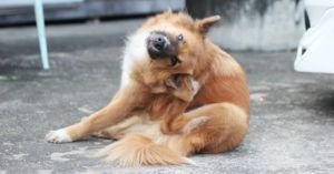 Top 6 Natural Ways To Ease Your Dog's Itchy Dry Skin