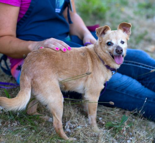 """PRECIOUS"" mature Chi mix loves her walks"