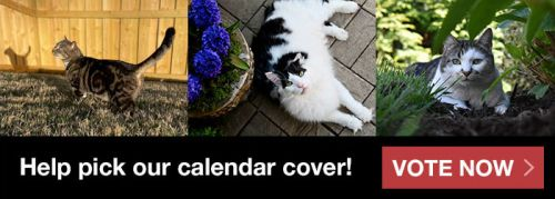 Cast Your Vote for Alley Cat Allies' 2021-2022 Calendar Cover Cat