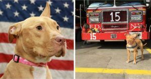 Abused & Abandoned Rescue Pup Finds A Home At FDNY Firehouse