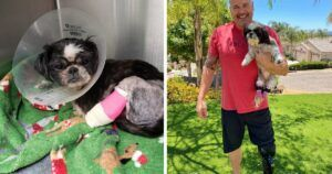 Shih-Tzu With Amputated Legs Rescued By Detective With Prosthetic