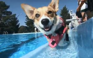 100 Denver Dogs Close Out Pool Season With A Splash